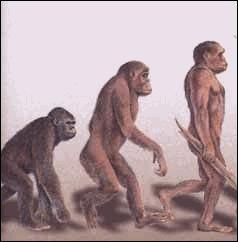 C'est vrai que les hommes descendent des singes ?