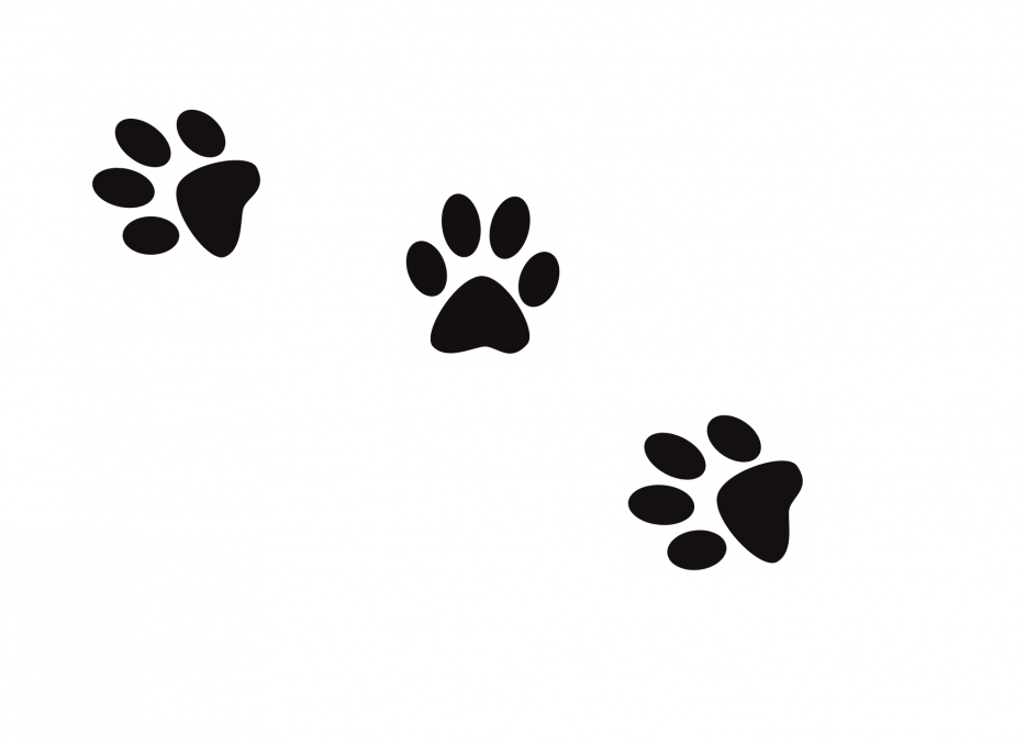 [align=center][size=14px][c=#ffa5fe][font=Times New Roman][i]Plus si affinités~[/i][/font][/c][/size][/align]