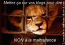 Photo de non-a-la-maltraitance15