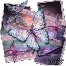 papillon trop beau