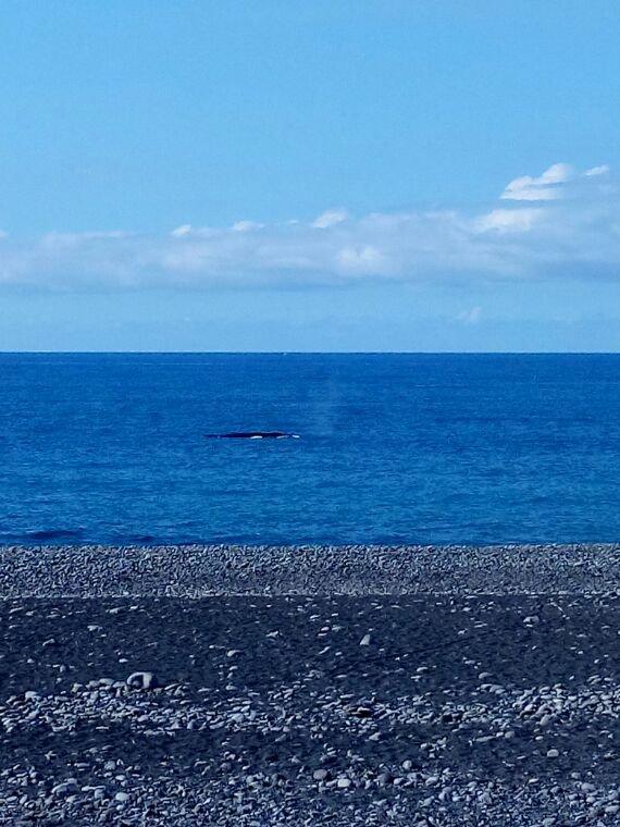 Le magnifique couché sur la route littoral une baleine tout de la côte de la réunion