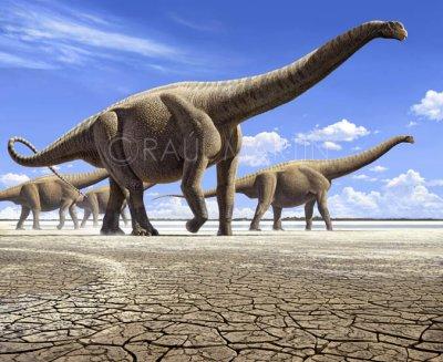 Reptiles & dinosaure