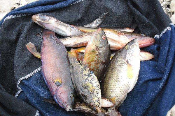 Pêche poissons de roches
