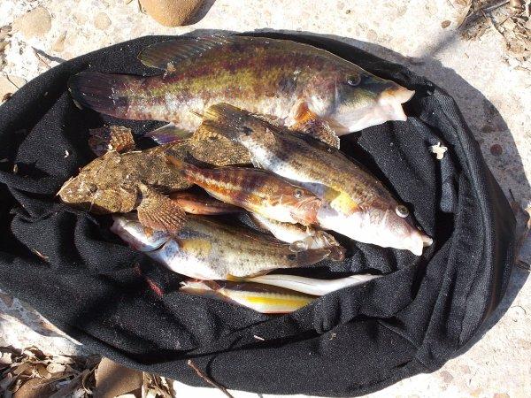Sortie de pêche à La Roche