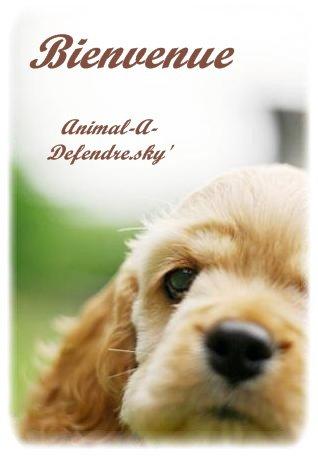 Animal-A-Defendre                                                                                                                                                                        Bienvenue