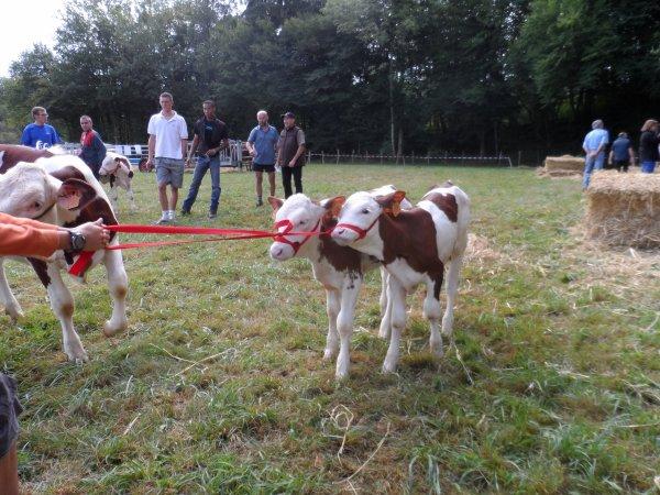 Comiss Agricole de ma ville (3)