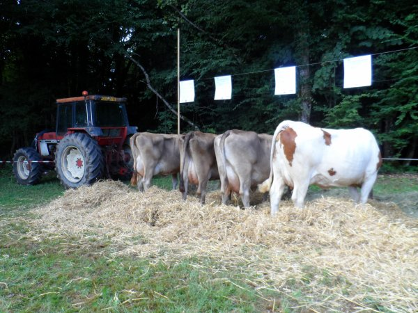 Comiss Agricole de ma ville (5)