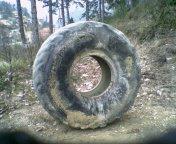 Le pneu 500kg, mon tout premier outil de strongman