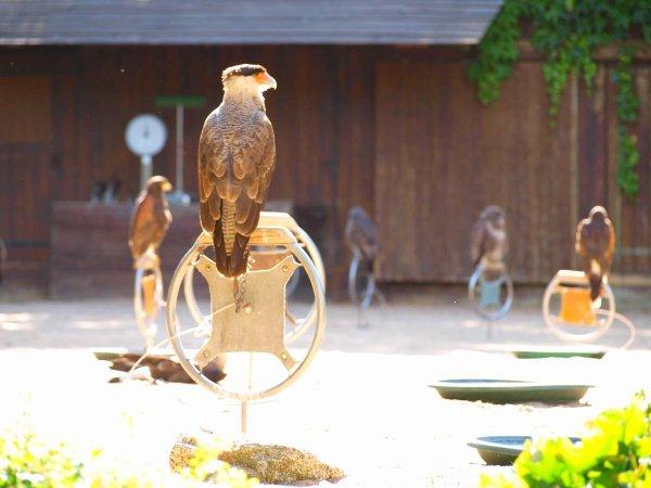 Qu'est-ce que être fauconnier ?