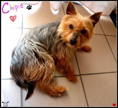 xXx--Ma Chipie ♥--xXx
