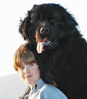 Le Terre-Neuve:un chien de famille qui aime l'eau