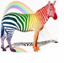 Photo de rainbow-zebra
