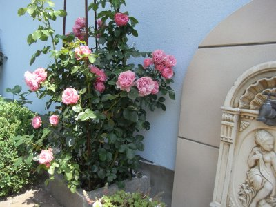 Cet été au jardin