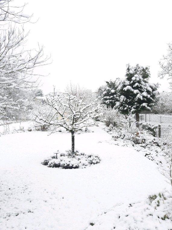 ce matin  la neige a recouvert le jardin hélas  dans la journée elle a fondue  en laissant ça et là  des bonnets blancs  sur mes buis