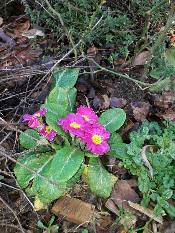 Floraison du mois de janvier