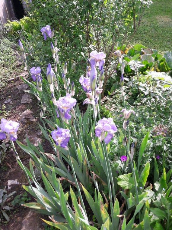 Que c est agréable de se promener au jardin et de s émerveillé à chaque éclosion d une fleure