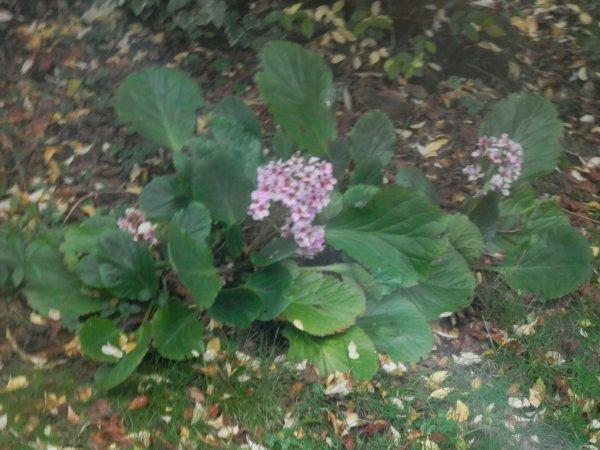 Un peu de botanique, une fois n'est pas coutume!