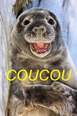 COUCOU DU SOIR
