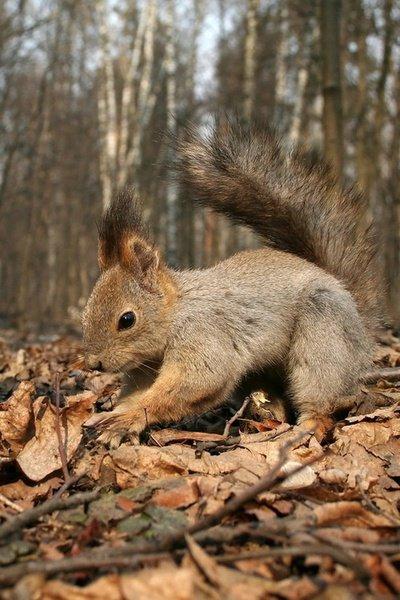 mon ami l'écureuil