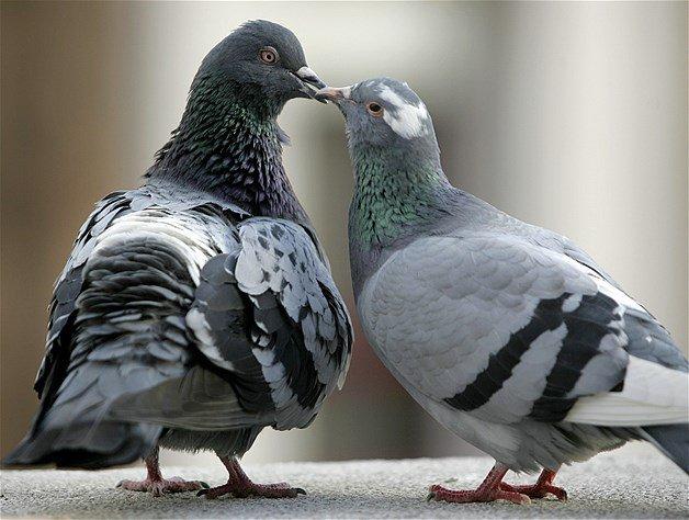 salut les amoureux 2