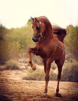 cheval mon ami