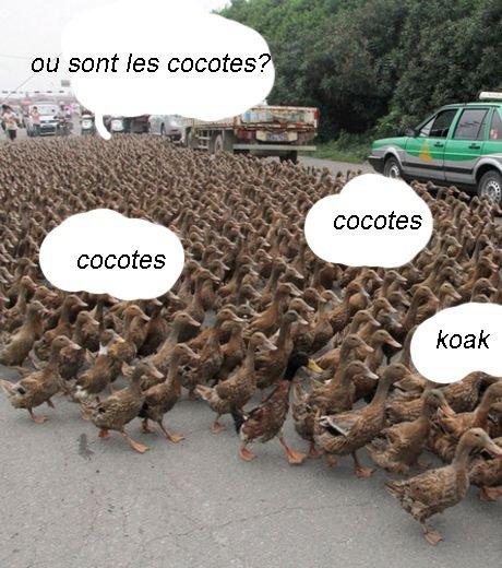 koak les cocotes