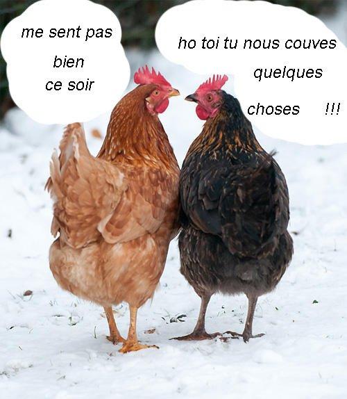 pauvre poule