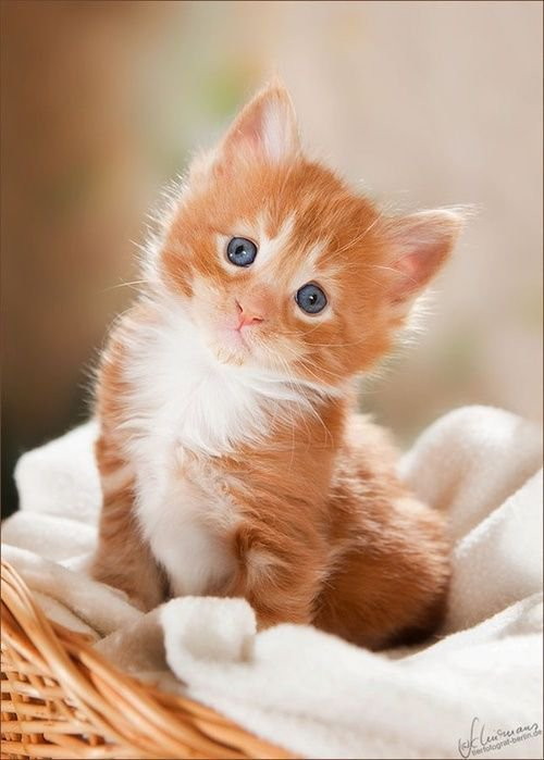 serie chatons