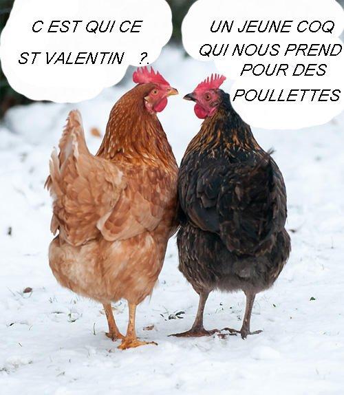 LES COCOTES DE ST VALENTIN
