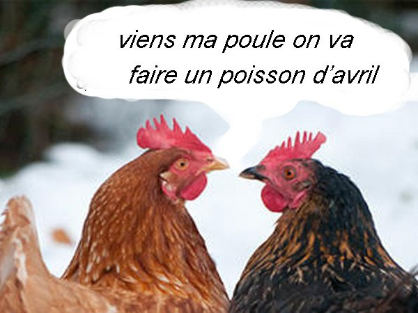 humour cocotes