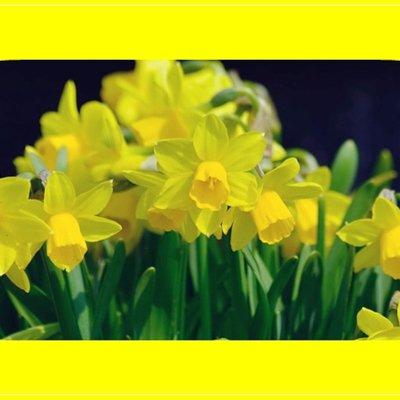 printemps en images