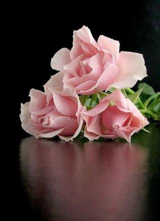 pour celles qui aiment les roses