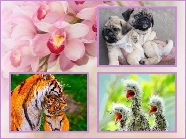 jolies images