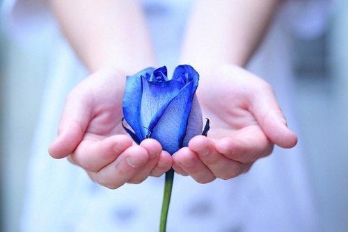 """CRAZY HORSE : """"Une fleur rien qu'une rose"""""""