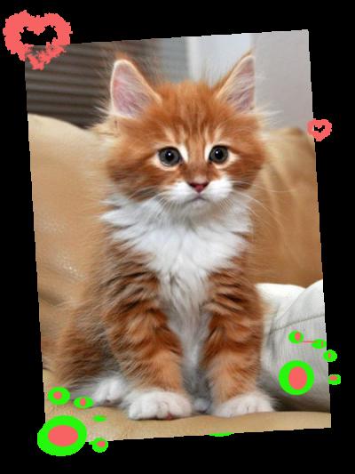 chatons mignons