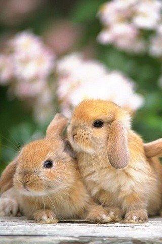 lapins calins
