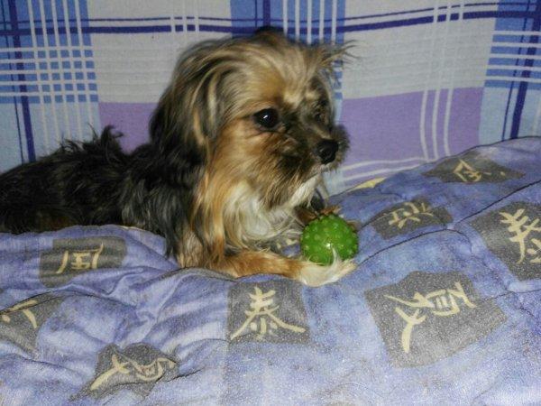 Chaussons aime sa balle verte