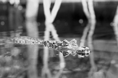 5. Le dragon du Nil ♫
