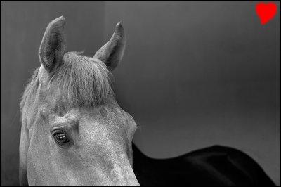 le courage des chevaux qui nous aide aux bon moment ,, avek qui on passe un superbe moment ,, alors toi aussi ,, rend lui heureux aux nu de l'enmener a l'abatteoir