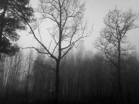 « Lorsqu'on perd quelqu'un, le sentiment de manque ne nous quitte jamais vraiment. Il faut vivre avec le vide laissé par l'absence. »