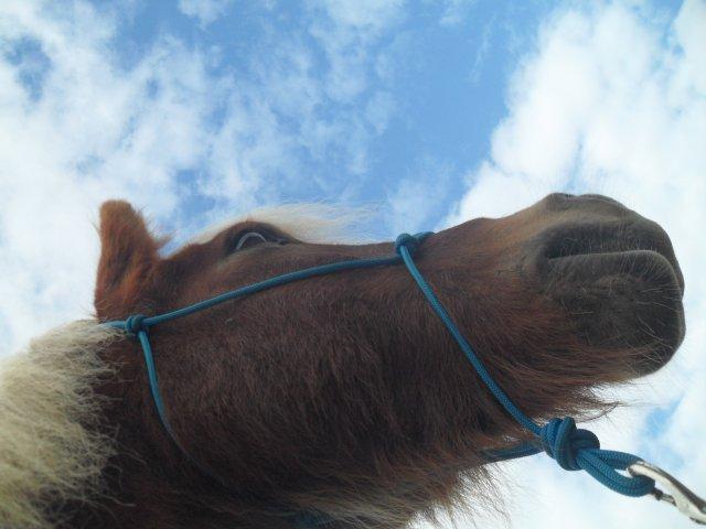 Blog de freedom-horse-dream