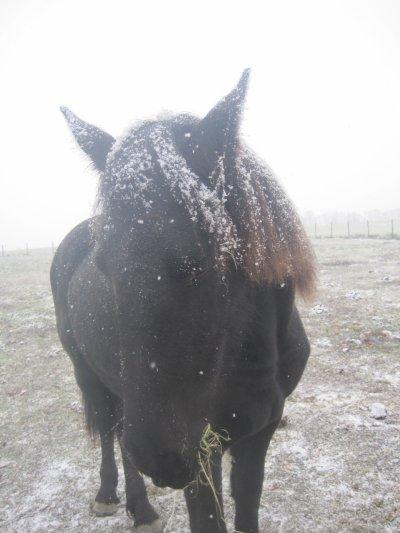 Séance photo sous la neige
