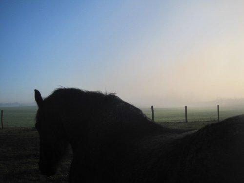 Séance photo dans la brume