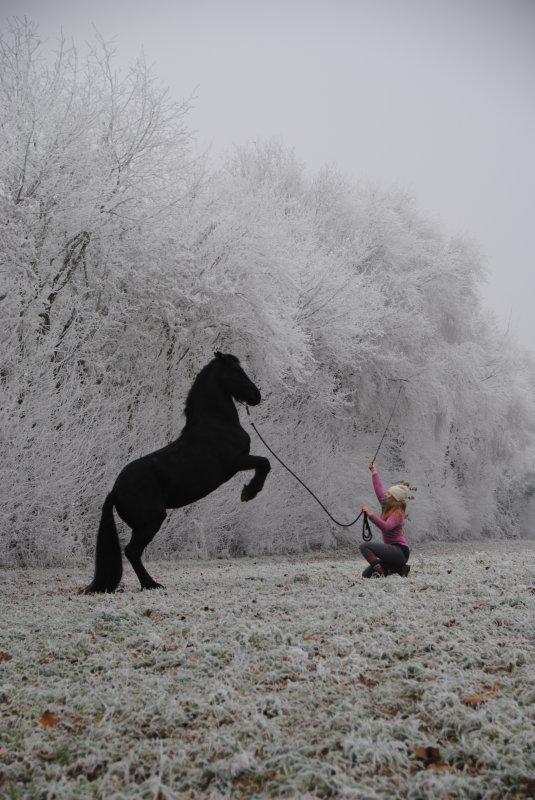 Série hiver 2016