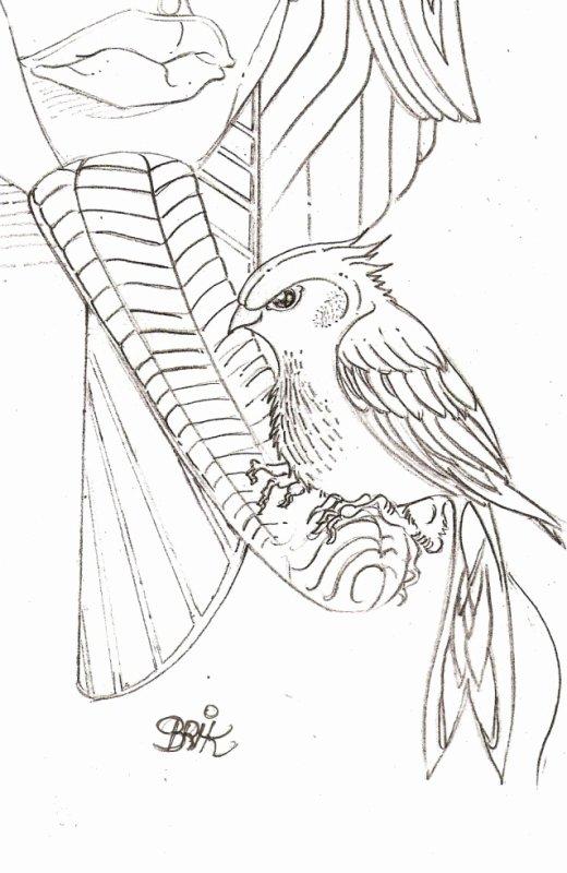 Petit oiseaux ... cherche coloriste !