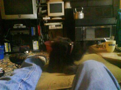 patapoile le chat de mon ex beaux perre