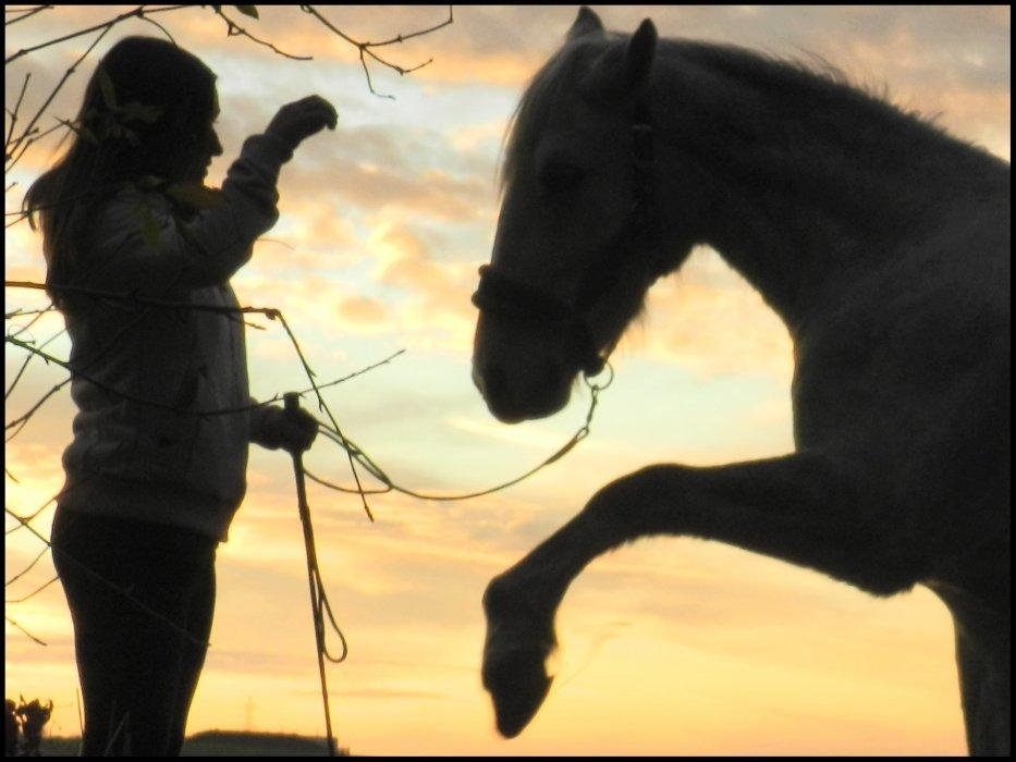 Apprenez à écouter les chevaux, Ils ont tellement à vous dire...