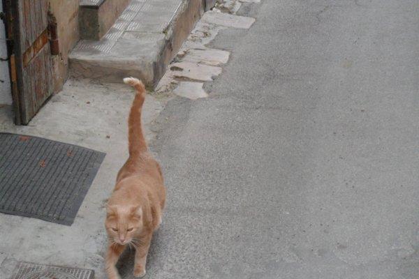 des animaux partout dans cette ville encore a l'ancienne