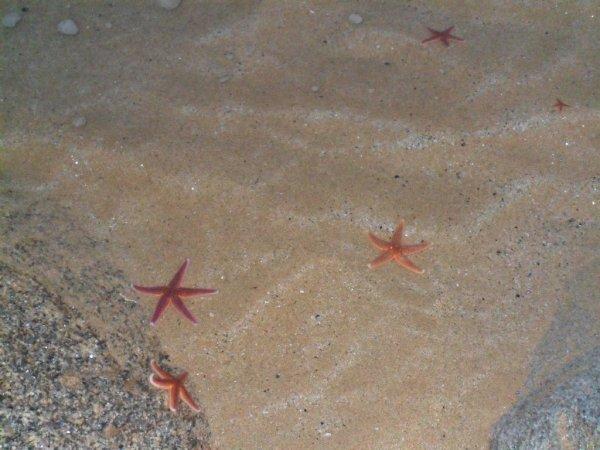 la grotte!!! les étoilles de mer