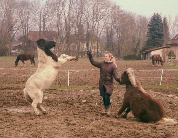 Travail des poneys